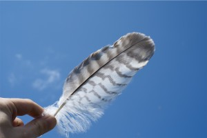Examining Feather in the Light